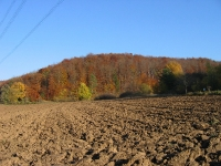 Molzbacher Wald