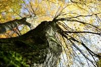den Baum hinauf