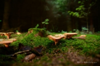 Pilze im Märchenwald