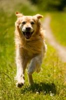 Hund im Sprint