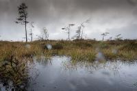 Novemberwetter im Schwarzen Moor