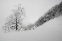 Winter Stillleben